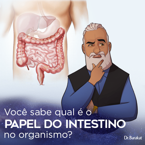 Papel do Intestino